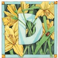 D is for Day Lily