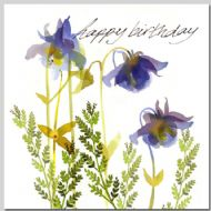 Aquilegia - Birthday