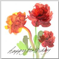 Ranunculus - Birthday